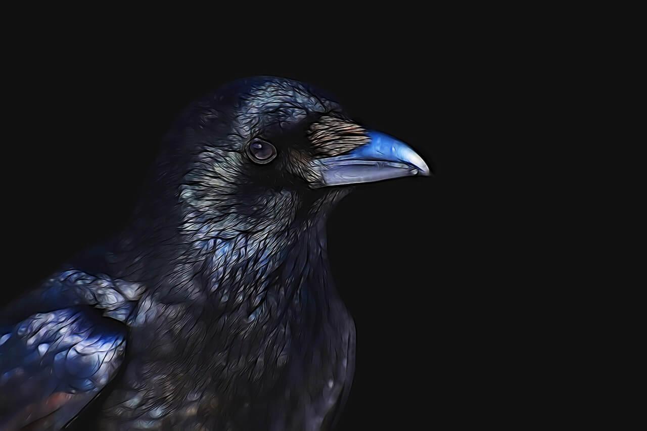 Você sabia? O corvo de Poe era originalmente um papagaio